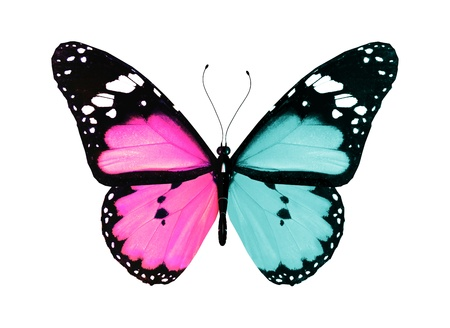 Photo pour Butterfly with blue and pink wings flying, isolated on white background - image libre de droit