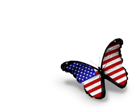 American flag butterfly, isolated on white background