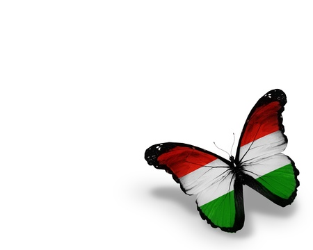 Hungarian flag butterfly