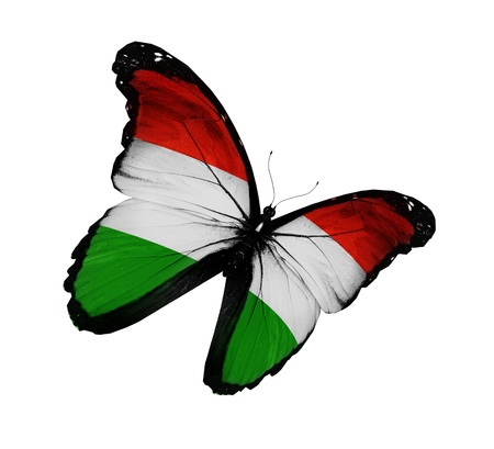 Hungarian flag butterfly flying