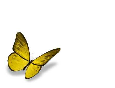 Yellow butterfly , isolated on white background