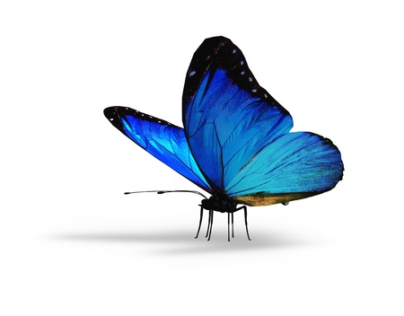 Photo pour Blue butterfly on white background - image libre de droit