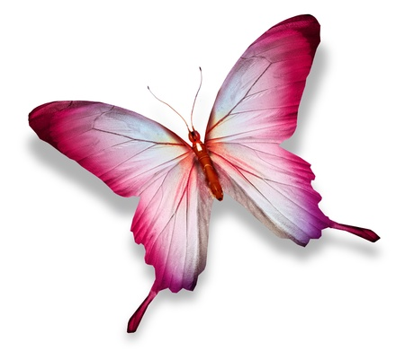 Photo for Pink butterfly , isolated on white - Royalty Free Image