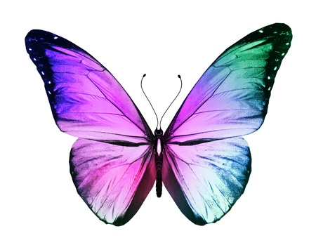 Photo pour Color butterfly, isolated on white background - image libre de droit