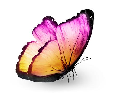 Foto de Color butterfly , isolated on white - Imagen libre de derechos