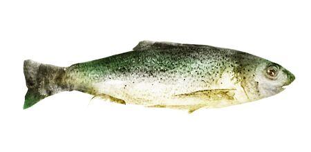 Photo pour Watercolor fish on white background - image libre de droit