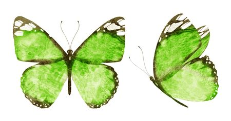 Photo pour Two watercolor butterflies , isolated on white background - image libre de droit
