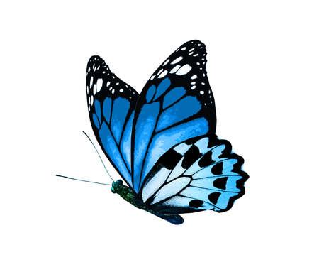 Foto de Color monarch butterfly, isolated on the white background - Imagen libre de derechos