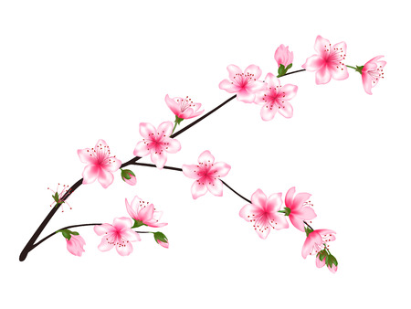 Illustration pour Spring bloom tree branch with pink flowers, buds vector illustration. Realistic design isolated on white. Bloom cherry tree twig set, plum blossom. Apple, peach, sakura, apricot flowering branch. - image libre de droit