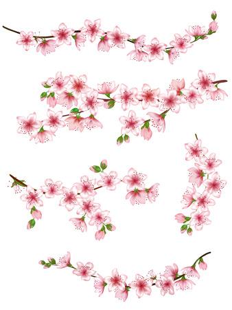Illustration pour Japanese cherry branches set vector illustration. - image libre de droit