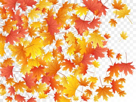 Illustration pour Maple leaves vector, autumn foliage on transparent background. Canadian symbol maple red yellow gold dry autumn leaves. Vivid tree foliage october background graphics. - image libre de droit
