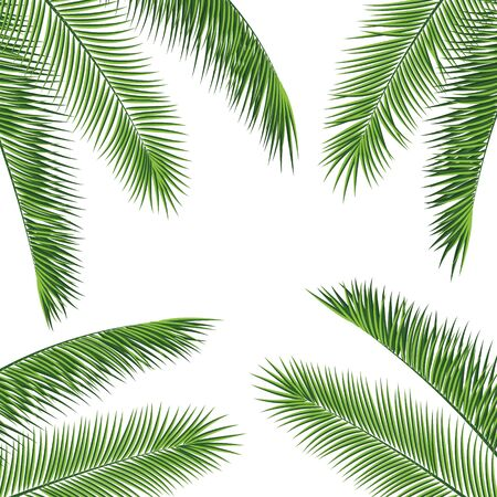 Illustration pour Fropical palm leaves frame botanical vector illustration. Exotic nature card or banner with frame for text isolated on white background. Jungle green leaf floral pattern. Tropical palm leaves card. - image libre de droit