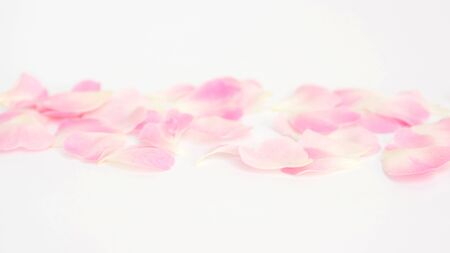Photo for Close up of white and pink rose flower for a background, soft focus. - Royalty Free Image