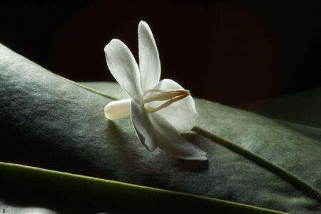 White flower on green leaf