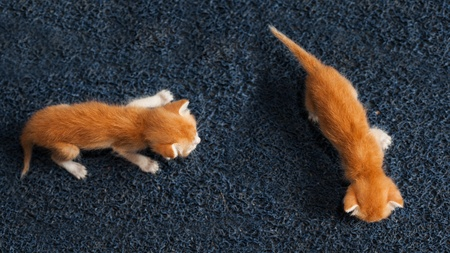 two kitty walking on the floor