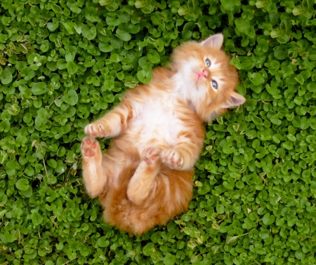 Tiny red kitten outdoors portrait.