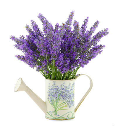 Watering can with lavender on white background.