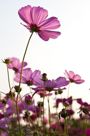Flower taken from low angle