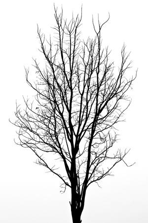 Pattern of dead tree
