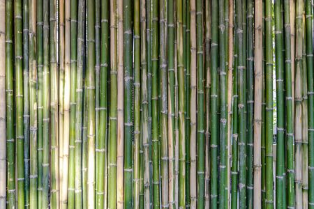 Photo pour Bamboo background and backdrop battens are arranged to the wall partition and fence in the morning with sunlight. - image libre de droit