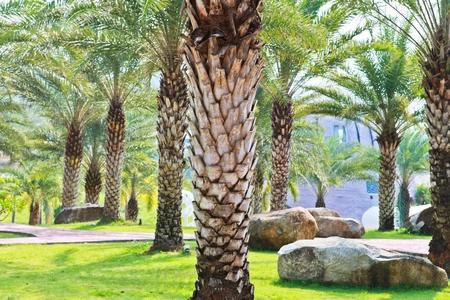 Palm tree garden