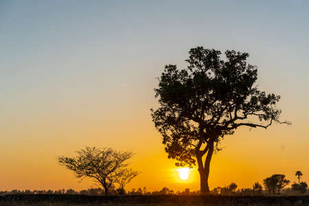 Photo for Golden beautiful Sunrise clear at dry grass fields and silhouette tree in the countryside at morning - Royalty Free Image