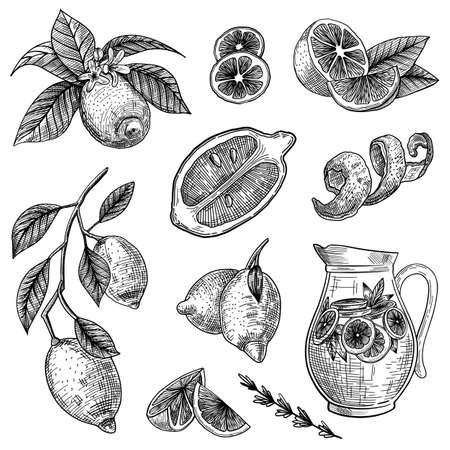 Photo pour Lemon or lime engraved vector illustrations set. Hand drawn sketch of citrus fruit cut in half, sliced or on branch, zest, peel on white background. Health, fruit, lemonade, tea, juice or diet concept - image libre de droit