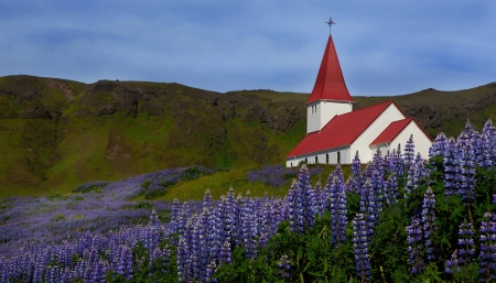 church surrounded by Lupins and flowers in Iceland
