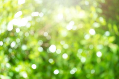 Photo pour Beautiful blurred tree and bokeh tree nature for background. Bokeh blur tree nature background with sunlight on summer. Spring season.   - image libre de droit