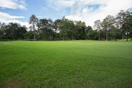 Foto de green grass field in the park - Imagen libre de derechos