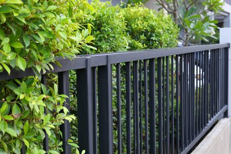 Photo pour black steel iron fence of boundary house with green leaf of shrub tree growing wall natural in garden - image libre de droit