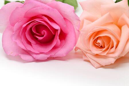 Foto de beautiful pink and orange rose flower isolated on white background - Imagen libre de derechos