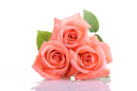 Photo for orange peach color tone of rose flower bouquet isolated on white background - Royalty Free Image