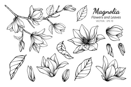 Illustration pour Collection set of magnolia flower and leaves drawing illustration. for pattern, logo, template, banner, posters, invitation and greeting card design.   - image libre de droit