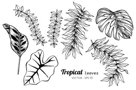 Ilustración de Collection set of Tropical leaves drawing illustration. for pattern, logo, template, banner, posters, invitation and greeting card design. - Imagen libre de derechos