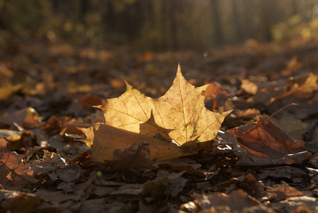 fall, yellow leaf in kontrovy light, on an indistinct background