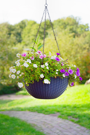 Photo for Hanging flower pot. Hanging Garden. A flower pot, hanging on a metal chain . close-up shot of a flower arrangement in basket pot hanging in the garden outside a house. - Royalty Free Image