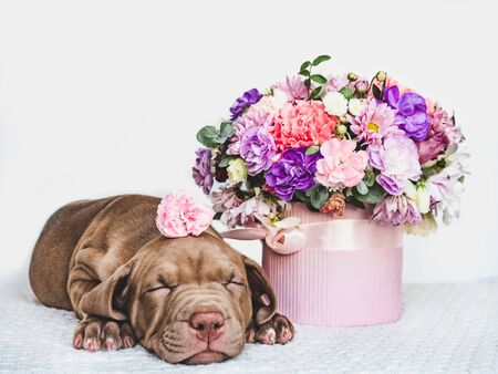 Foto de Young, charming puppy and a bouquet of fresh, bright flowers in a vintage vase. Close-up, isolated background. Studio photo. Concept of care, education, training and raising of animals - Imagen libre de derechos