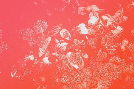 Photo for Abstract natural texture of natural leaves close-up toned in living coral color. Fashionable, trendy color, bright colorful background, copy space - Royalty Free Image