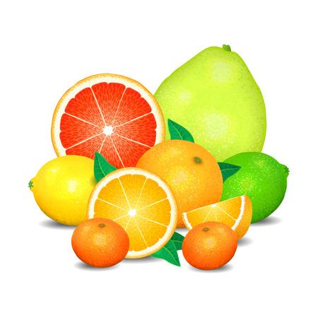 Illustration pour Fruit of citrus, set of citrus fruit. Citrus fruits (orange, lemon, lime, grapefruit, pomelo, mandarin). - image libre de droit