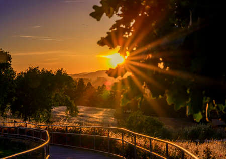 Photo pour Landscape with a silhouette of trees with sun flare at sunset at a vineyard in the spring in Napa Valley, California, USA - image libre de droit