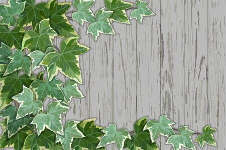 Illustration pour Old rustic wooden wall half covered by common ivy - image libre de droit
