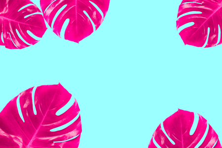 Vivid pink monstera leaves as frame on mint colored background. Exotic surreal pattern. Top view, flat lay.