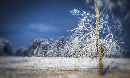 Photo pour Landscape of forest area in the winter during a heavy frost. - image libre de droit