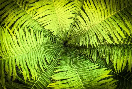 Top view of a garden fern closeup as a background.