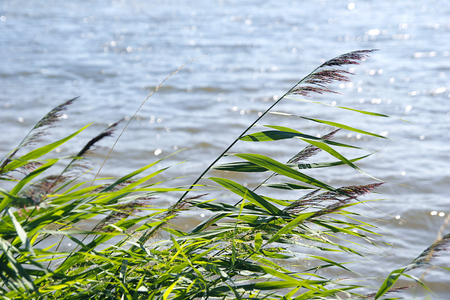 reeds on the wind