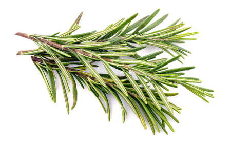 Photo for Rosemary isolated on a white background - Royalty Free Image