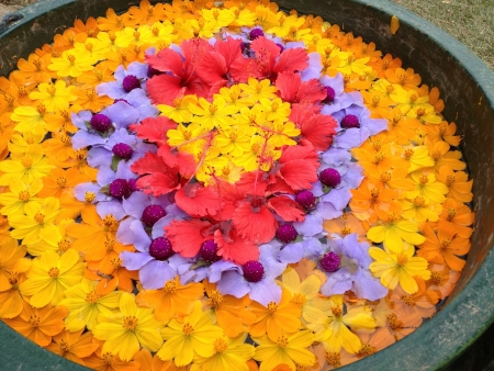 Colorful arranged flowers on water