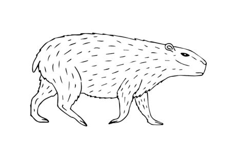 Illustration pour Vector hand drawn sketch capybara isolated on white background - image libre de droit