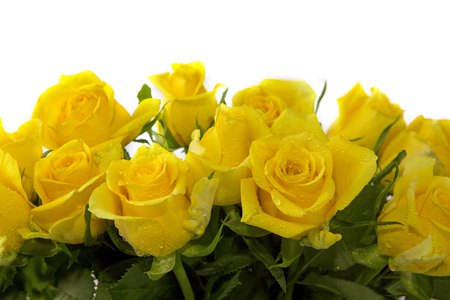 Photo pour Yellow  rose  bouquet isolated on white background. - image libre de droit